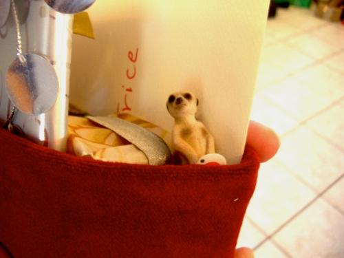 Meerkat in stocking!