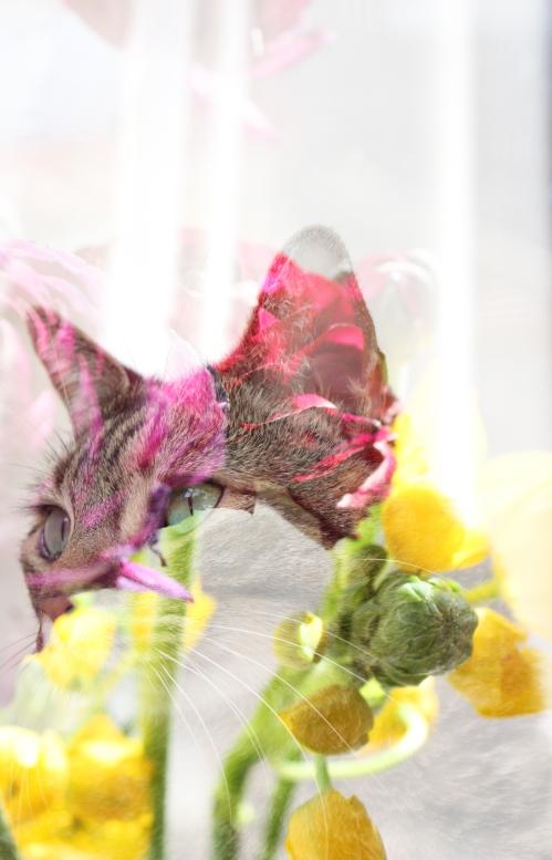 schween_flowers