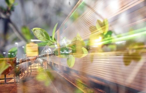 train_leaves