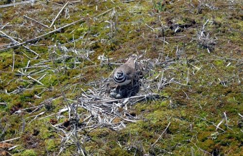 Mama bird settling in on the nest.