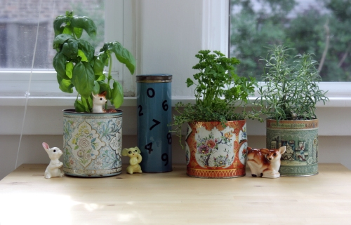 Herbs are planted in the tins!